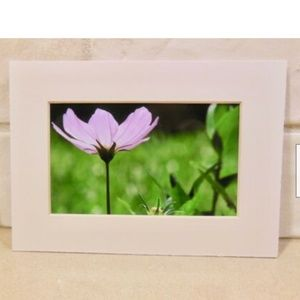 Other - Purple Pink Cosmo Photograph Picture 5 x 7 inches